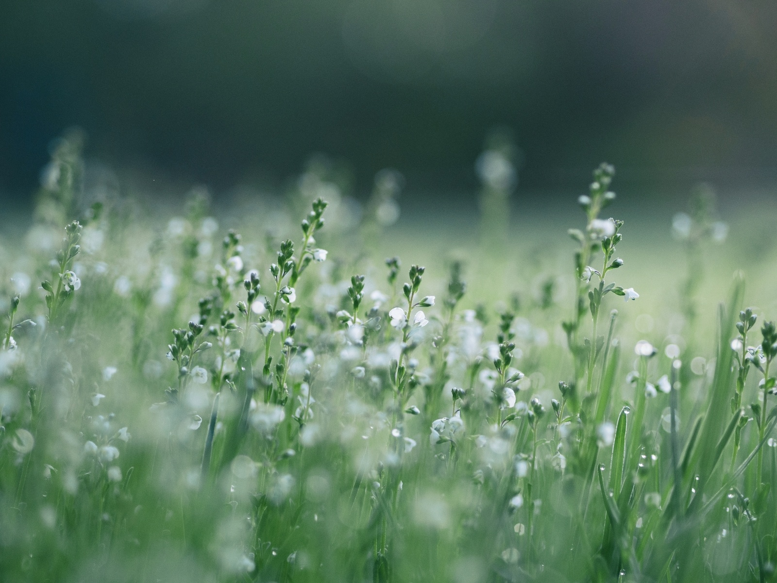 Shallow Focus White Flowers by Aaron-Burden