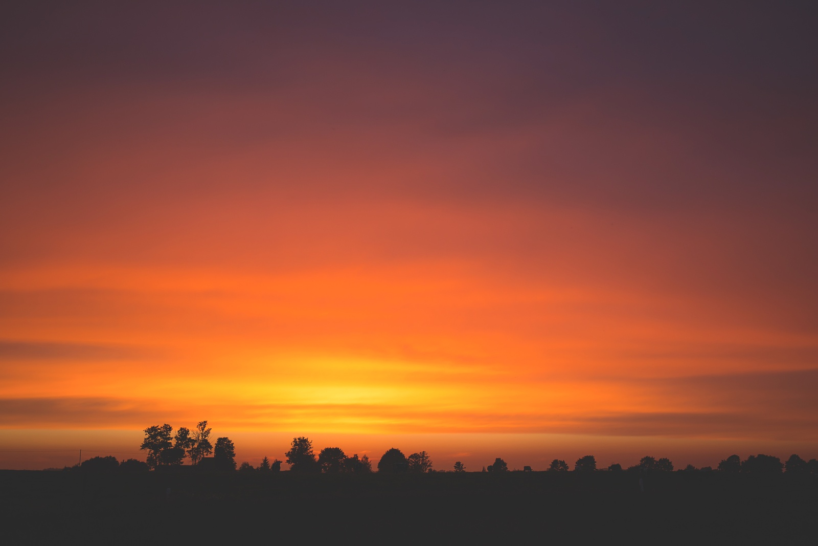 Silhouette of Trees by Freestocks