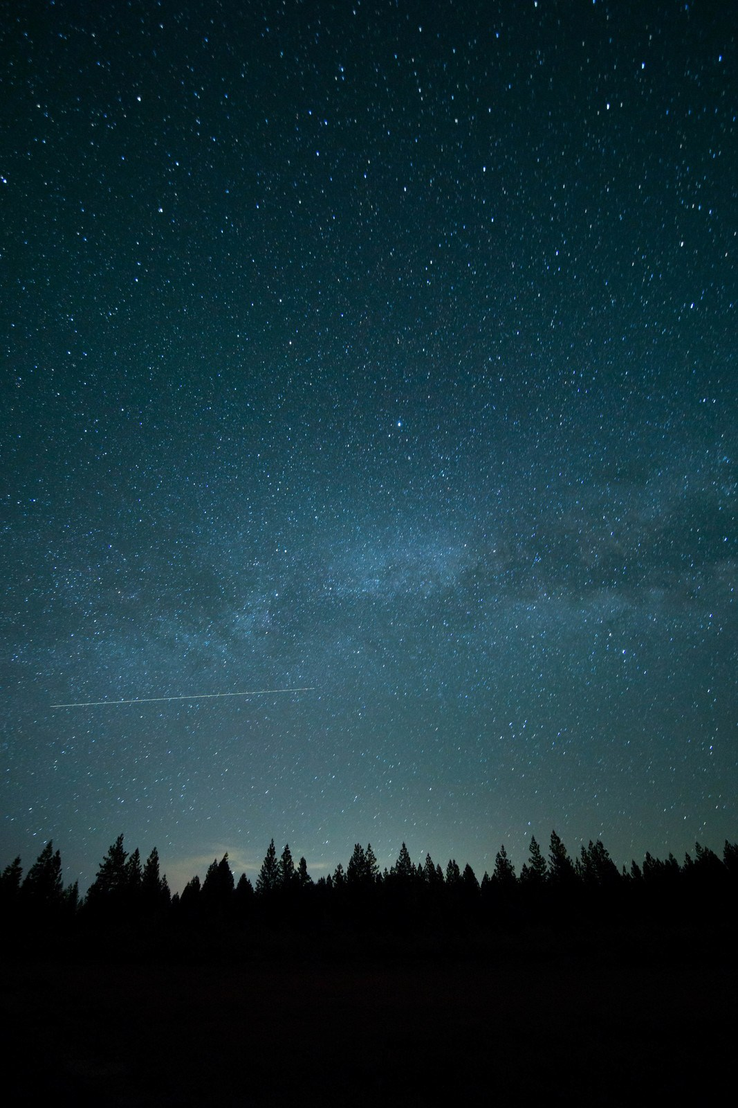 Trees And Stars at Nighttime by Wil-Stewart